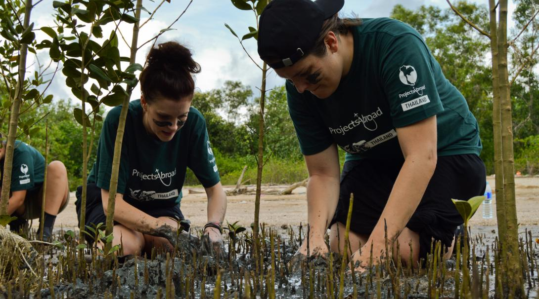 Conservation volunteers replant mangroves in Thailand